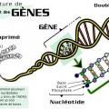 featured image Information sur l'ADN et les maladies génétiques.